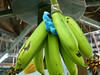 huge bananas + cookie monster, Tropical Fruit Farm
