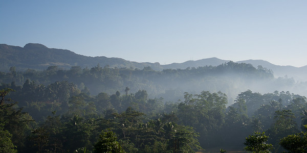 Sinharaja Rainforest early morning