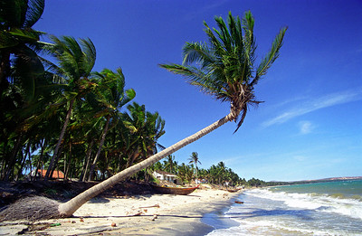 White-sand Beach with Palm Trees, Mui Ne