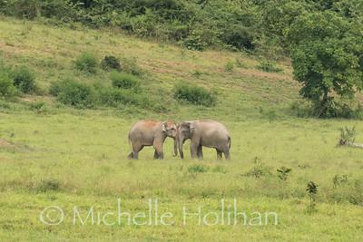 Wild Elephants, Kui Buri National Park, Thailand