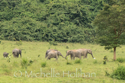 Wild Elephants, Kui Buri National Park, Thailand