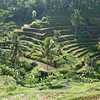 Typical terraced agricultural scene in Bali Highlands, Indonesia
