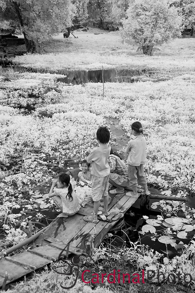 Khmer locals use a small woven tray a a boat to float out and collect Hibiscus flowers near Beng Melea Temple, Siem Reap, Cambodia, Asia