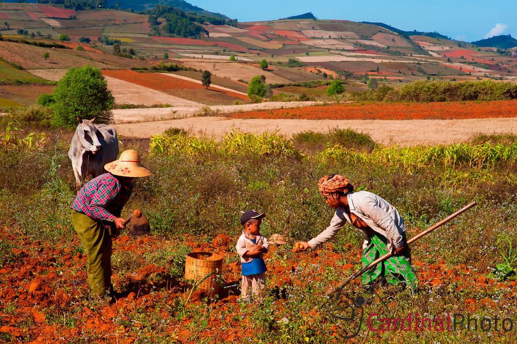 Kalaw, Pindaya, Shan State, Myanmar