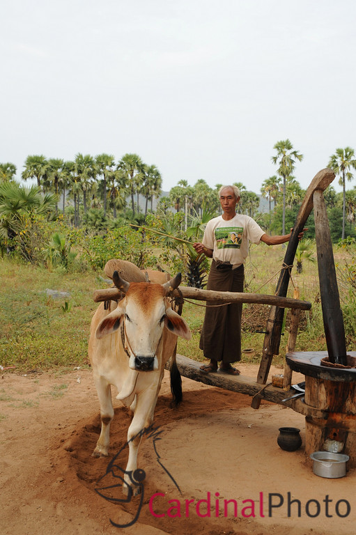 Mount Popa and Villages, Bagan Area, Myanmar