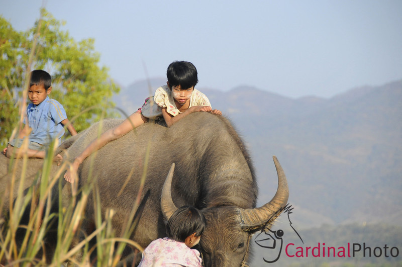 Inle Lake Area, Shan State, Myanmar (Burma), Southeast Asia 1/ 2000s, at f/6.7 || E.Comp:0 || 135mm || WB: AUTO 0. || ISO: 800 || Tone:  || Sharp:  || Camera: NIKON D300on: 2009:01:13 16:27:03