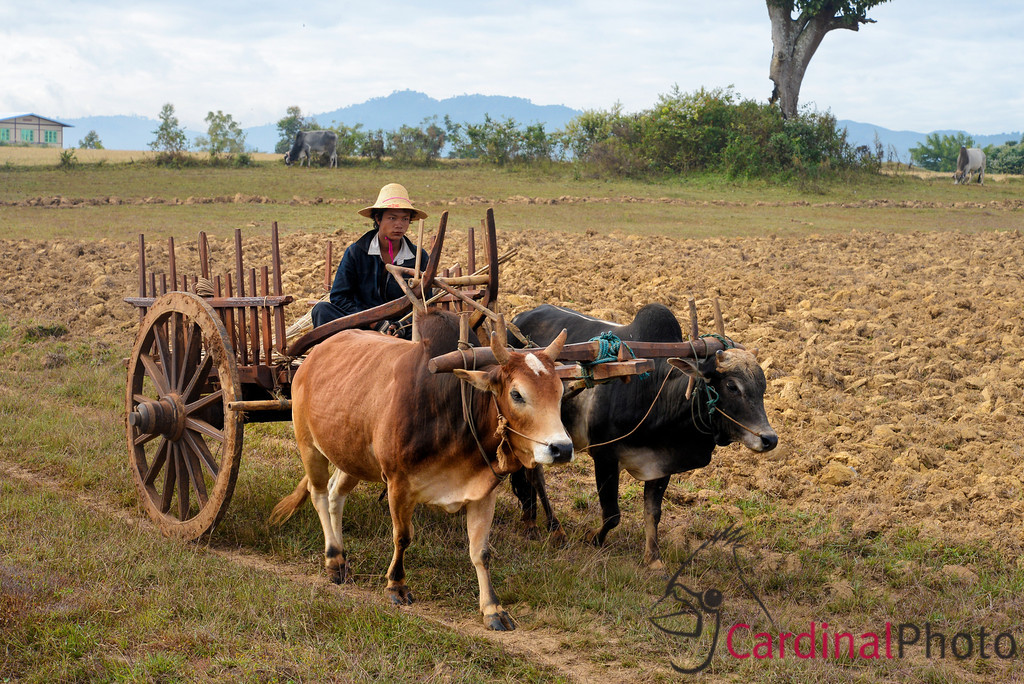 Shan Sate, Kalaw, Pindaya and Inle Lake Myanmar