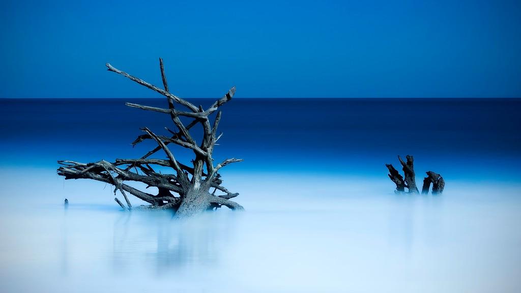 Dead Tree; Hunting Island State Park; St Helena Island; South Carolina; USA