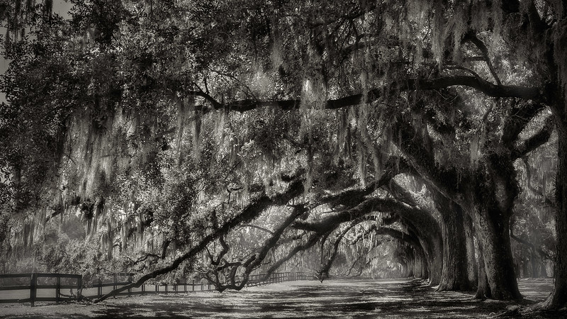 Boone Hall Plantation; Charleston; South Carolina; USA