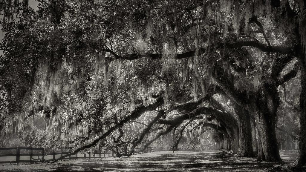 Boone Hall Plantation; Charleston; South Carolina; USA