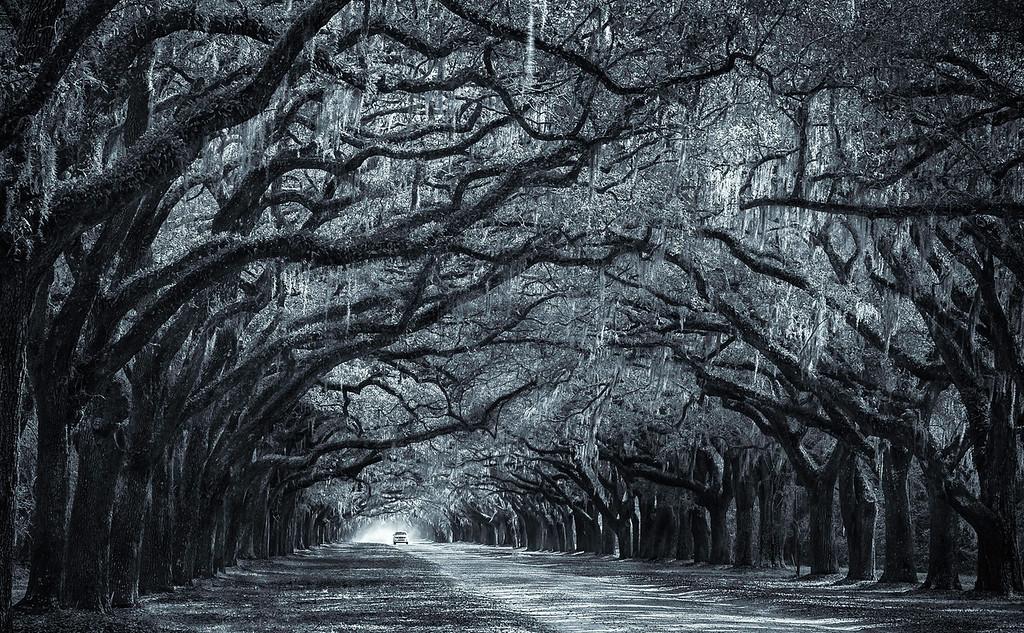 Wormsloe Plantation; Savannah; Georgia; USA