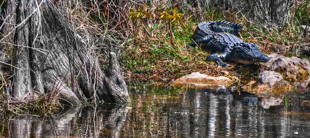 Tamiami Trail; Florida; USA