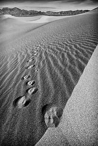 Coyote Tracks, Mesquite Dunes