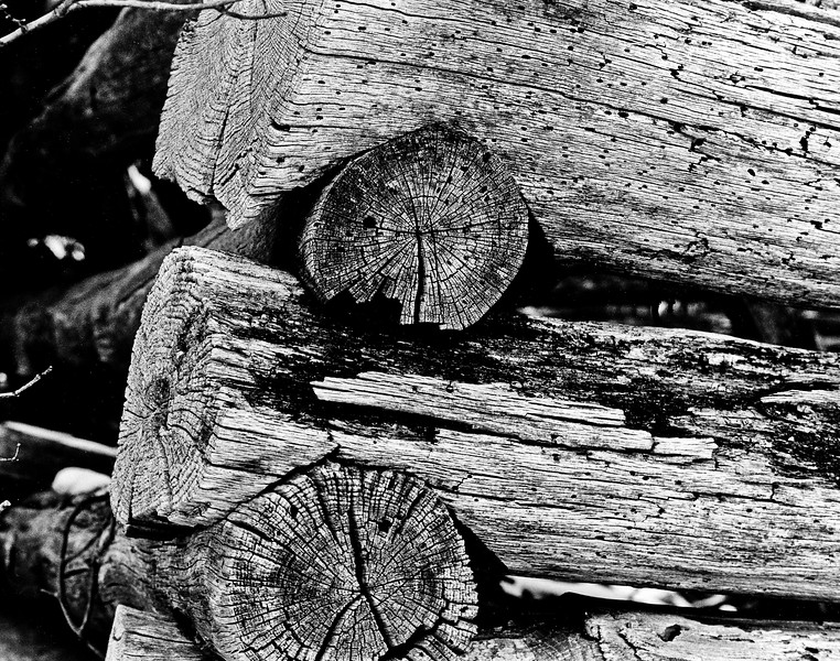 Log Detail.jpg
