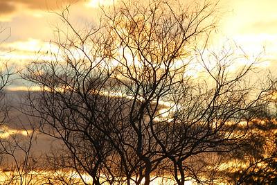 Tree Cloud Silhouette