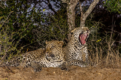 Southern Africa 2015