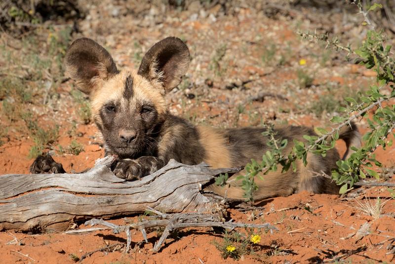Tswalu Kalahari Reserve, South Africa.