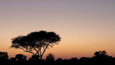 Chobe sunrise