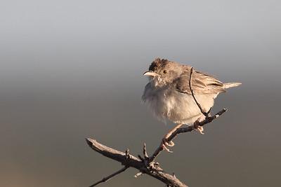 Unidentified song bird