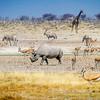 A Black rhinoceros at the Nebrownii Waterhole, Etosha National Park, Namibia