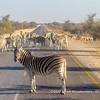 Burchell's zebras blocking the road to Okaukuejo, Etosha National Park, Namibia
