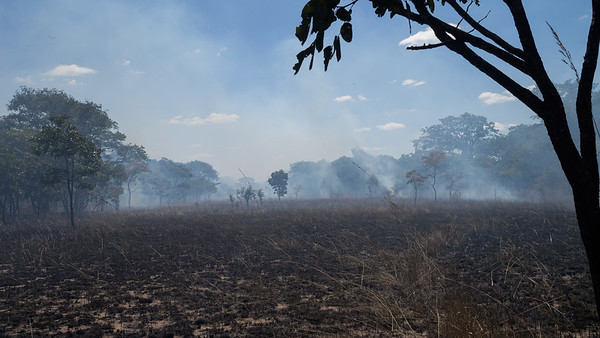 Kasanka burning operations