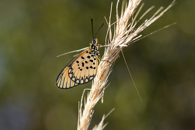 A butterfly, recently emerged from its chrysalis, dries its wings in the bright midday sun of rural Mozambique.