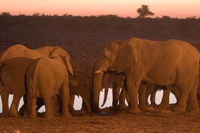Elephants communing at a waterhole