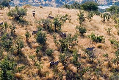 Oryx on a hillside