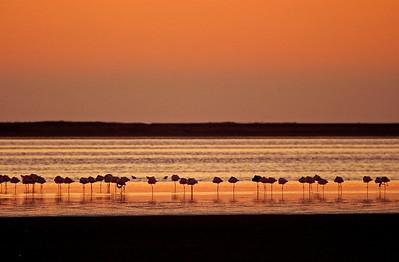 Flamingos along salt flats near Walvis Bay