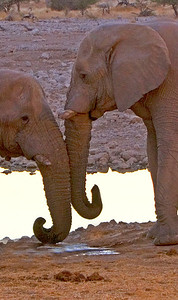 Interacting elephants at a waterhole