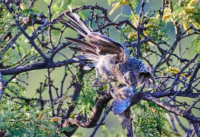 Southern Arizona Birds