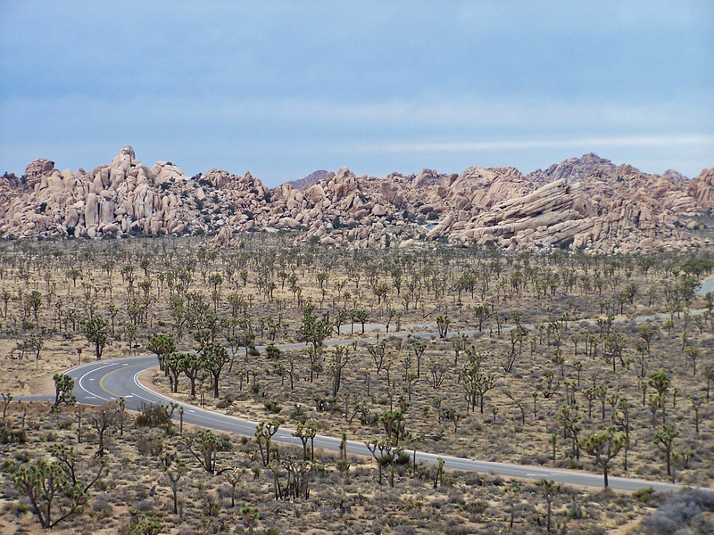 Joshua Tree Woodland viewed from Cap Rock