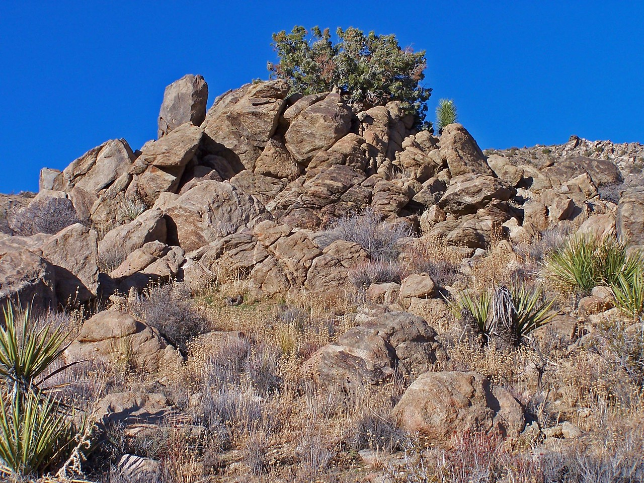 Rock outcropping, Covington Flats