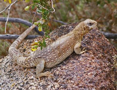 Southern California Desert and San Diago Zoo