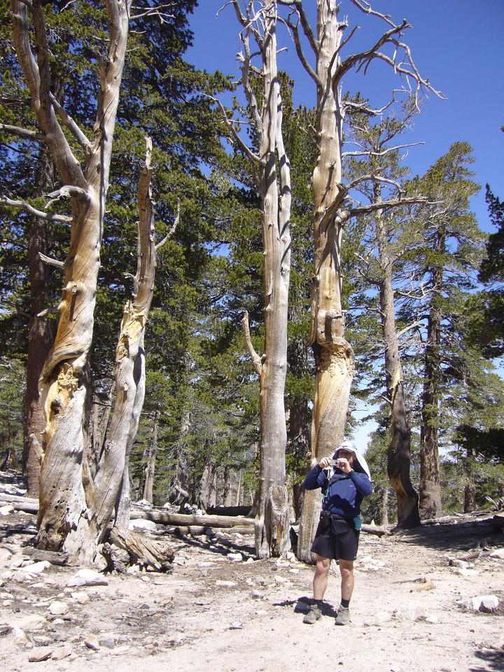 Tony at Mine Shaft Saddle.<br /> <br /> San Gorgonio Wilderness : South Fork : Dry Lake : San Gorgonio Mountain : Dollar Lake