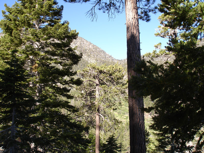 Dollar Lake Saddle.<br /> <br /> San Gorgonio Wilderness : South Fork : Dry Lake : San Gorgonio Mountain : Dollar Lake