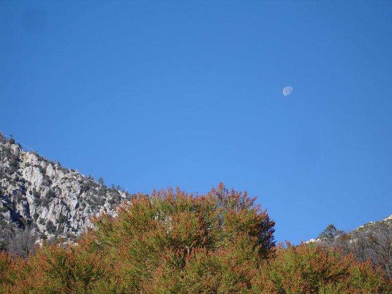 Gibbous Moon II