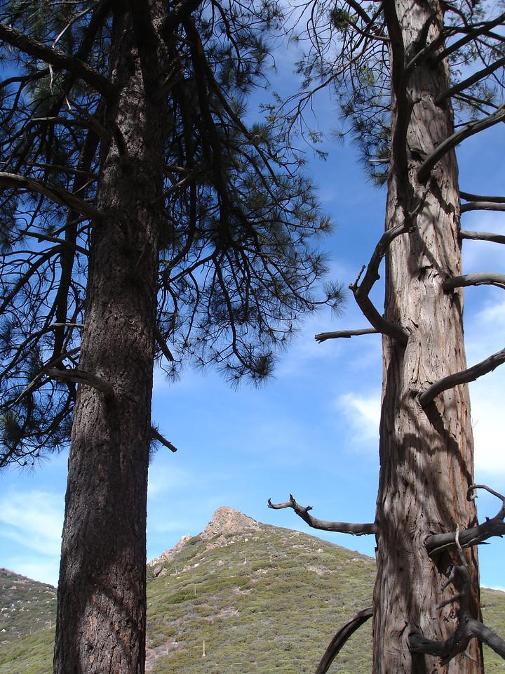 San Jacinto Wilderness: Desert Divide: Fobes Trail: Palm View Peak