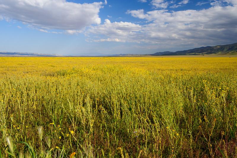 Lake of Yellow
