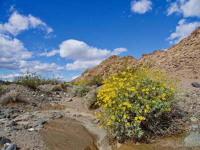 Salt Creek Springs