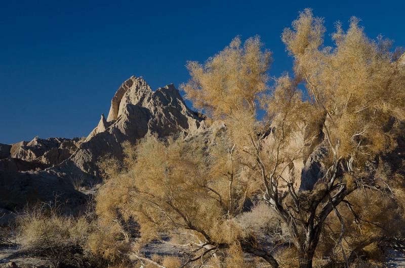 Peak and Tree