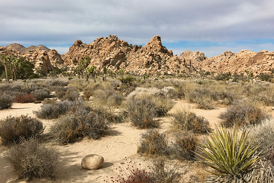 On the trail to Ryan Ranch in JTNP