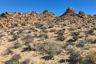Hiking one of the Maze Loop trails in Joshua Trees NP.