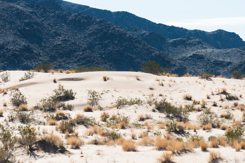 Dune-ish
