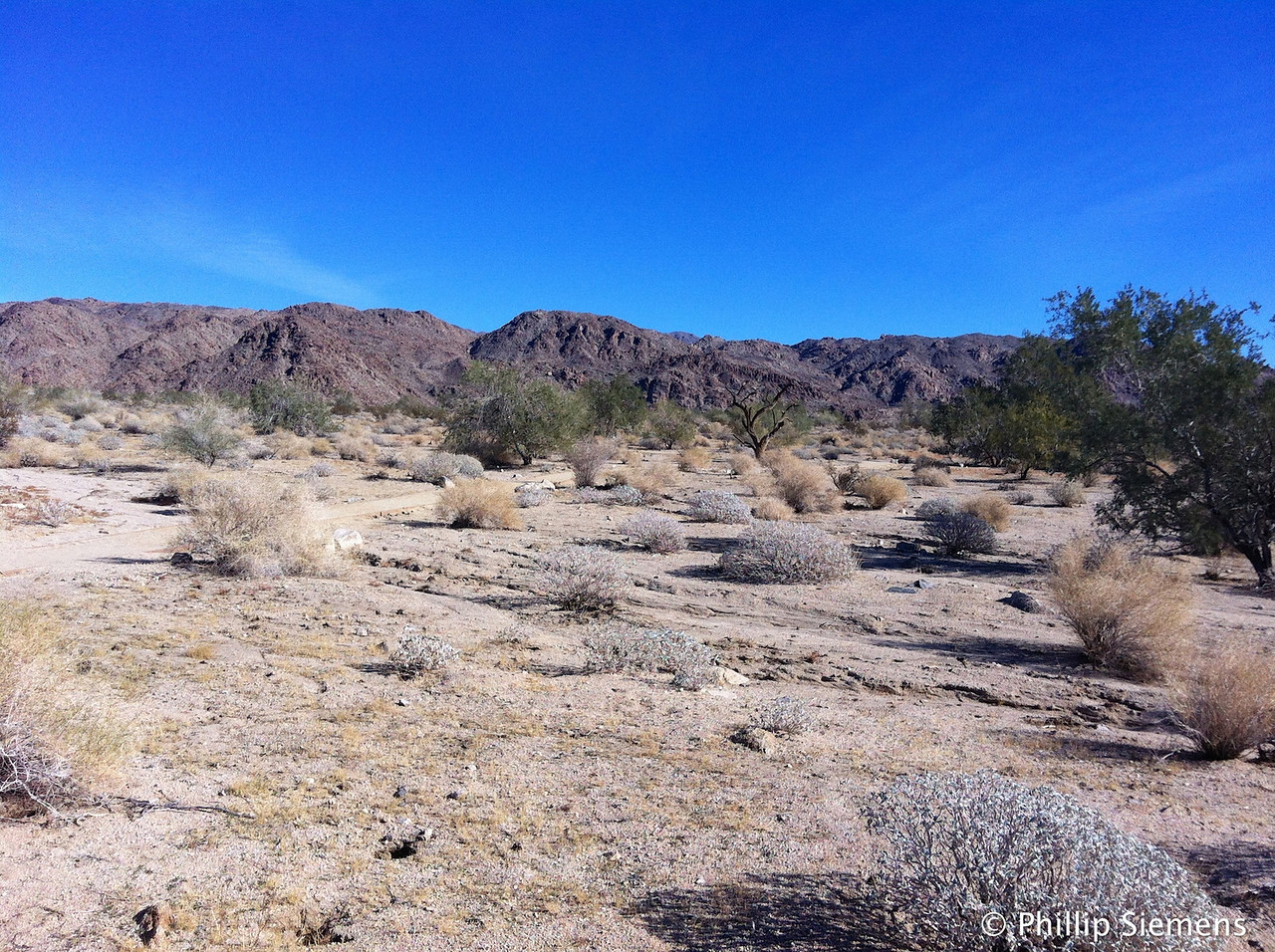 This is the south side of Joshua Trees National Park