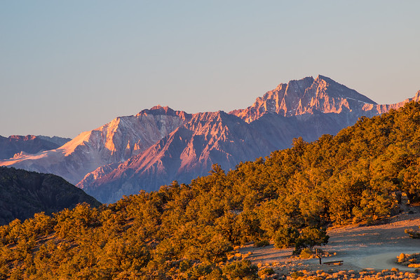 inyo national forest; sierra nevada; sunrise; white mountains Split Mountain with pink-ish light cast by the sunrise. Viewed from near our campsite just above Grandview Campground.