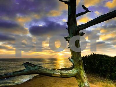 Tree watching Oceanside Sunset