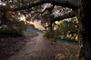 Rancho Sierra Vista/Satwiwa State Park