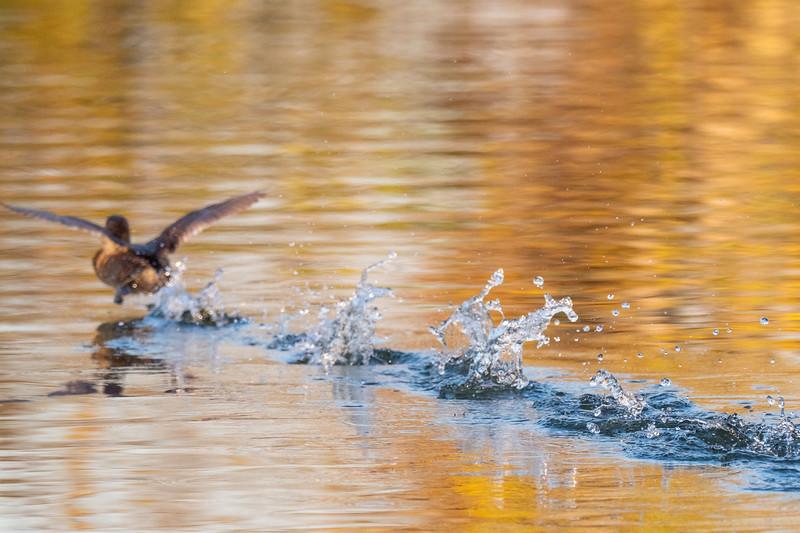 Sepulveda Basin Wildlife Reserve